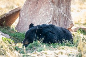 Dormez comme un ours avec cette combinaison pyjama